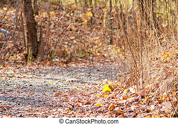 de, steegjes, in, de, herfst bos