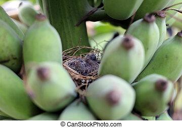 de vogels van de baby, in, een, nest.