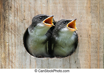 de vogels van de baby, in, een, observeer vogels huis