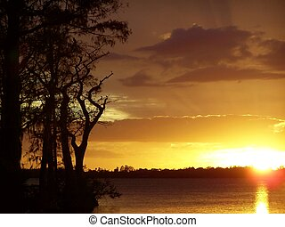 de zonsondergang van de cipres