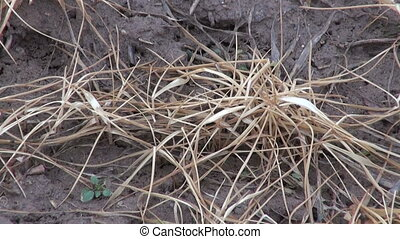 dead agriculture crop sprouts