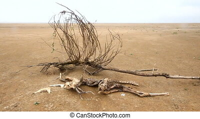 dead animal among sand and drought - lost animal on desert...