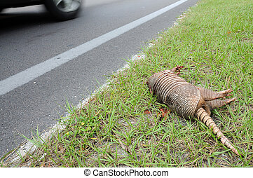 Dead Aramdillo at the side of a road in Florida
