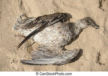 Dead Bird - Dead bird on the beach