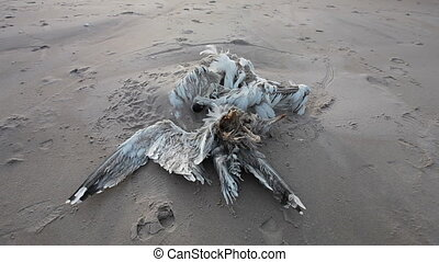 Dead bird in sandy beach - Dead bird corpse in sandy beach,...
