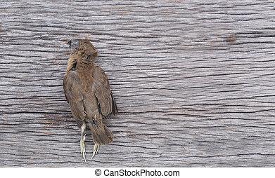 Dead bird on the wooden floor.