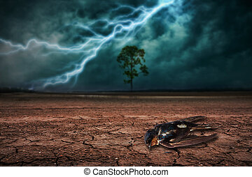 Dead birds on land to the ground dry cracked and big tree. With lightning storm