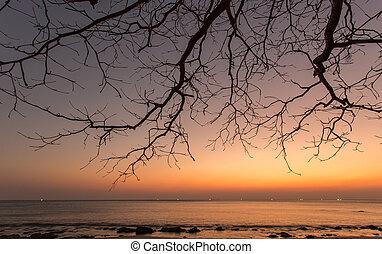Dead branch at sunset beach