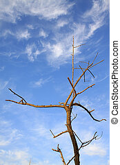 dead branches in the blue sky