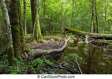 Dead broken trees moss wrapped and waterhole