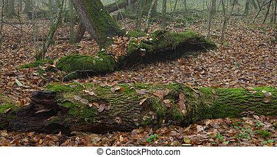 Dead broken trees moss wrapped in autumn