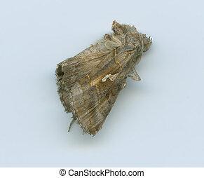 dead butterfly 1