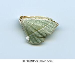 dead butterfly 3