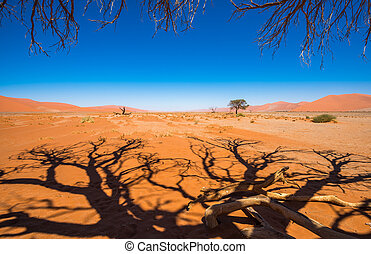 Dead Camelthorn Trees and red dunes in Sossusvlei,...