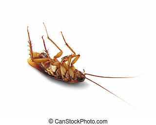 Dead Cockroach isolated o - Dead Cockroach on his back - ...