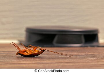 Dead cockroach next to roach bait.