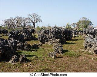 Dead Coral Garden