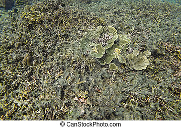 Dead coral reef caused by sea pollution and global warming in Philippines