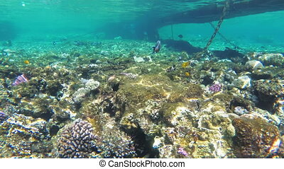 Dead Coral Reef with Colorful Tropical Fish in Red Sea....