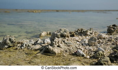 Dead Corals Reefs, Lady Elliot Island Beach