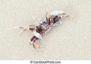 Dead crab.
