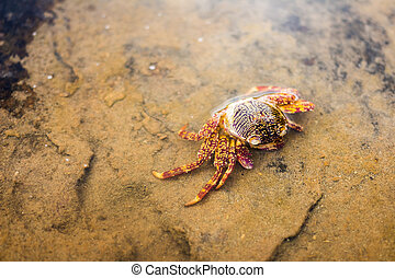 Dead crab washed ashore on the North Sea beach at low tide
