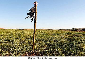 Dead Crow in Field - A dead crow hang in a watermelon field ...