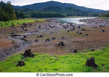 Dead Cut Stumps in Riverbed