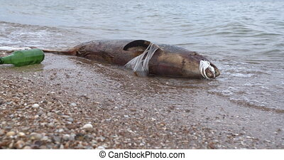 Dead dolphin at Polluted Waters . Sea pollution toxic...