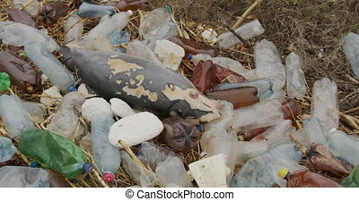 Dead dolphin. Ecological catastrophes, animals die due to poisoning of plastic garbage and human waste due to an environmental disaster. 6k