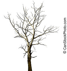 Dead dried oak tree isolated on white