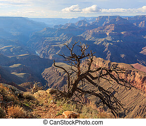 Dead dry tree on the Grand Canyon cliff, Arizona, United States