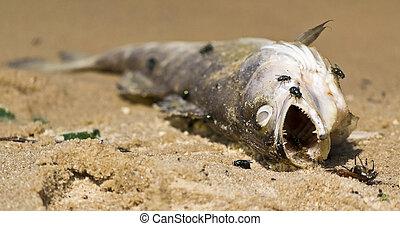 dead fish on the beach,