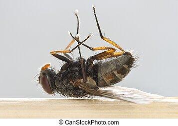 Dead Fly - Macro