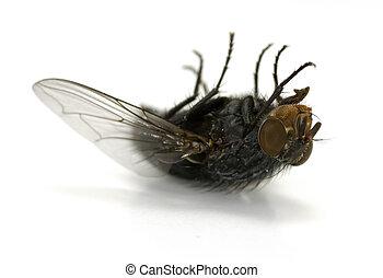 Fly - Dead Fly