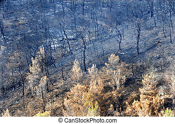 Dead Forest After Fire