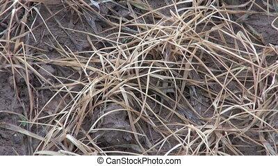 dead frozen agriculture crop sprout