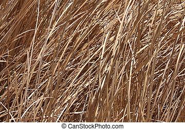 Dead grass background