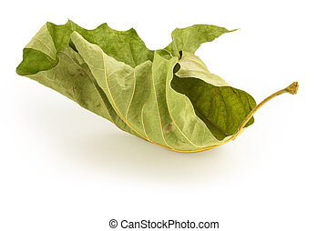 Dead Green Leaf - Dried up green leaf on white background...
