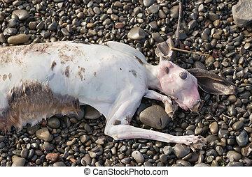 Dead Hare 01