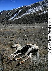 Dead Horse, India