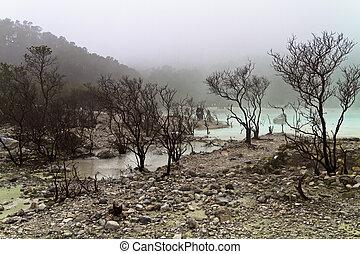 rows of dead trees atthe edge of volcanic crater lake of Kawah Putih, Bandung Indonesia