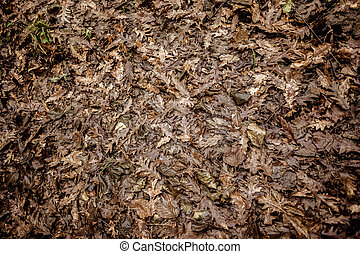 Dead Leaves - a lot of dead, dry leaves in the undergrowth