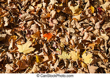 Dead Leaves Background Texture
