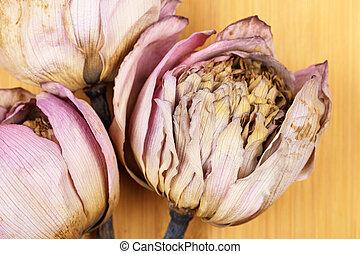 Dead lotus close up
