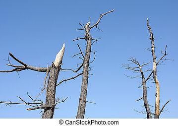 dead pine tree