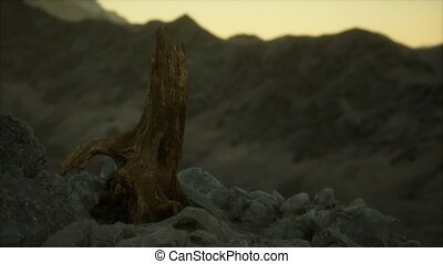 Dead pine tree at granite rock at sunset