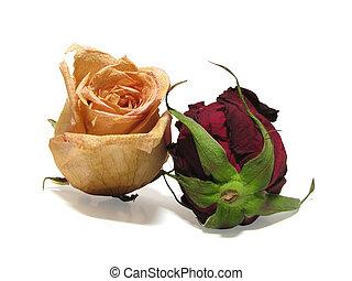 dead roses 02