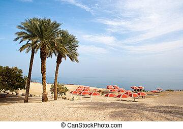 Dead Sea - Israel - Ein Gedi oase at the Dead Sea. Israel