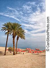 Dead Sea Israel - Ein Gedi oase at the Dead Sea. Israel